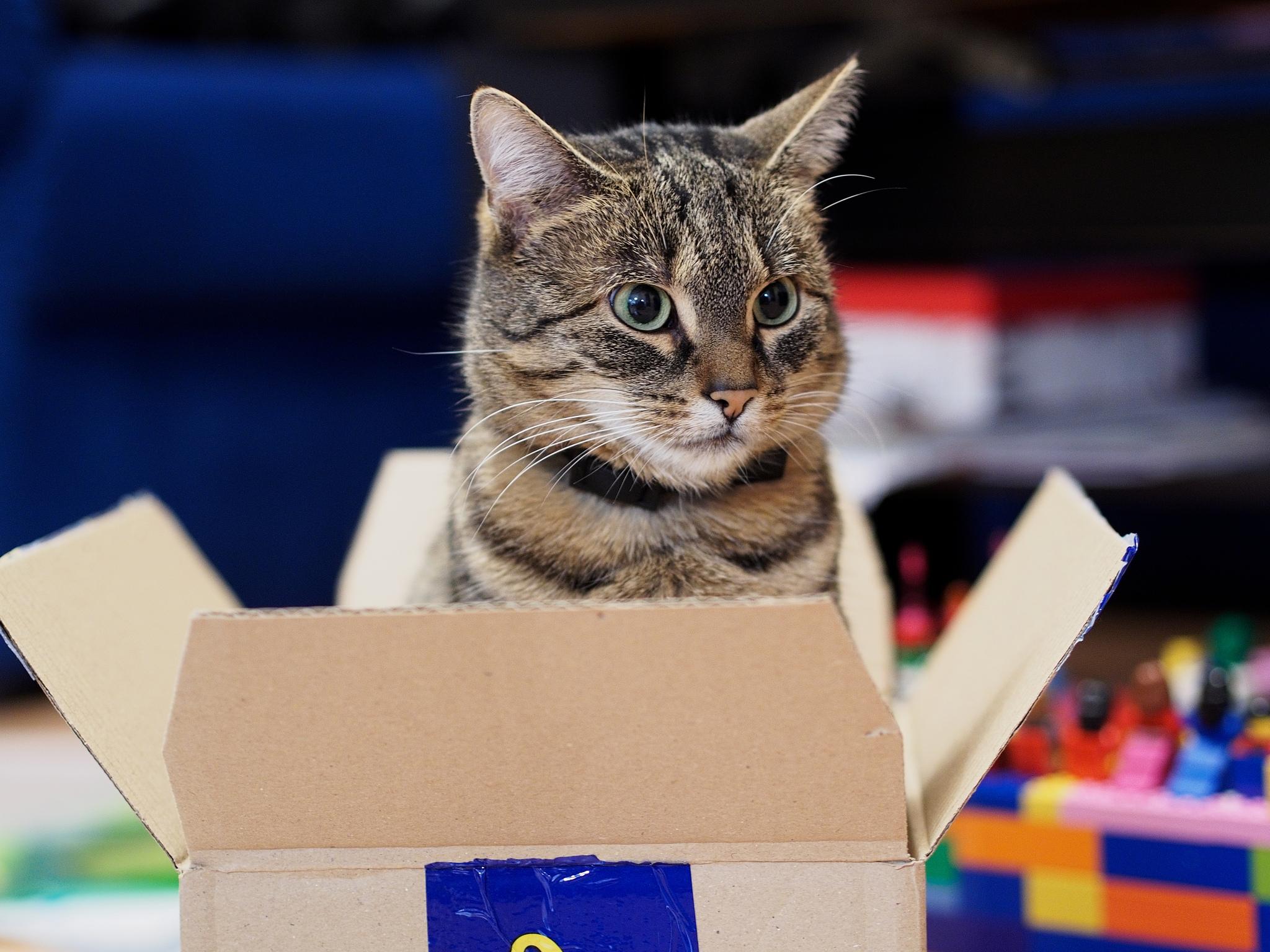 Come traslocare con un gatto