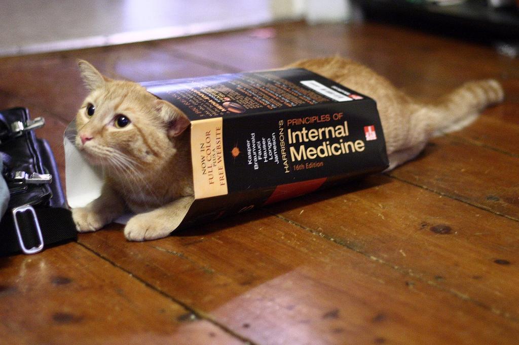 Come dare la pastiglia al gatto